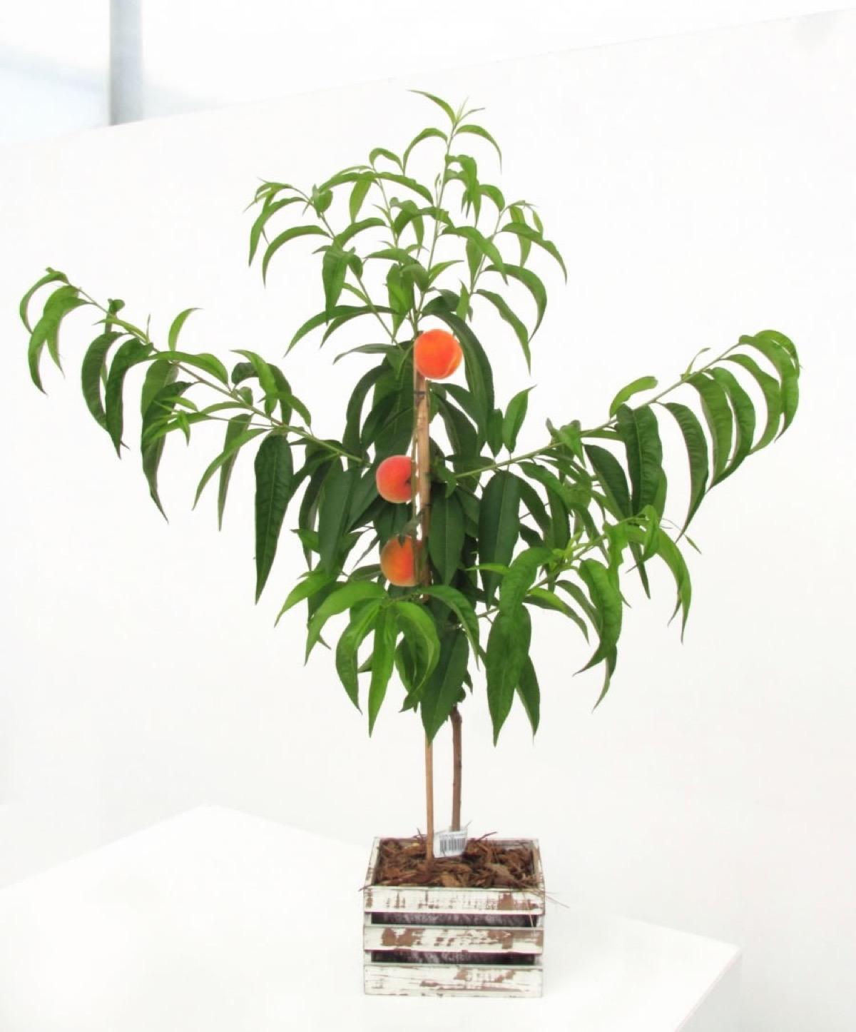 fruitme2